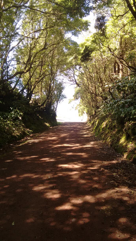 Lagoinho trail
